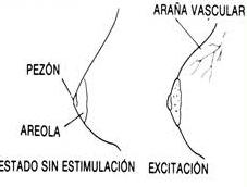 excitación en senos mujer
