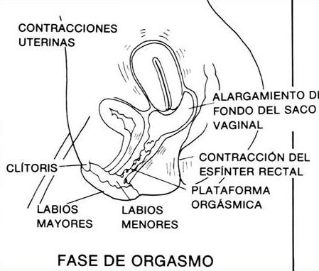 orgasmo femenino, excitación en la mujer